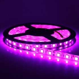 LED نواری بنفش درشت 5050 60Pcs رول 5متری
